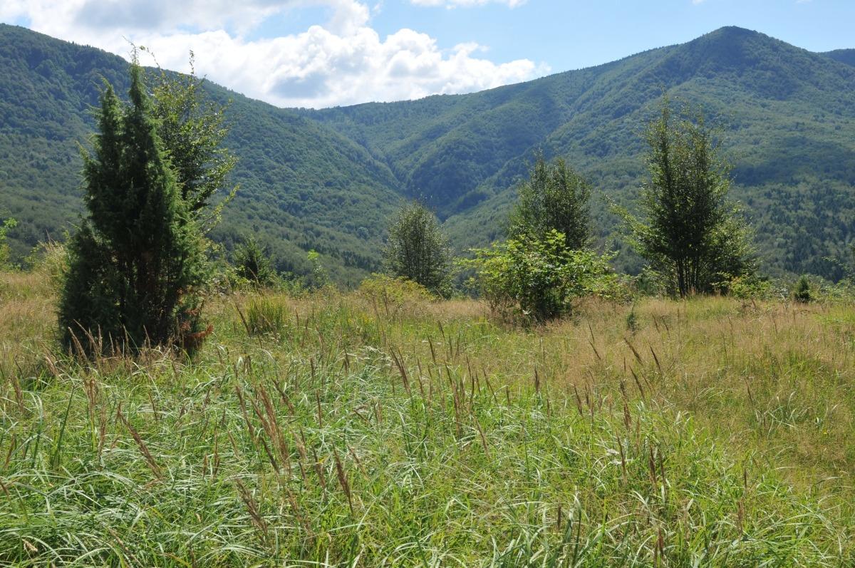 zimbri armeniș munții țarcu