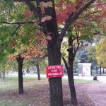 atenție, cad frunzele