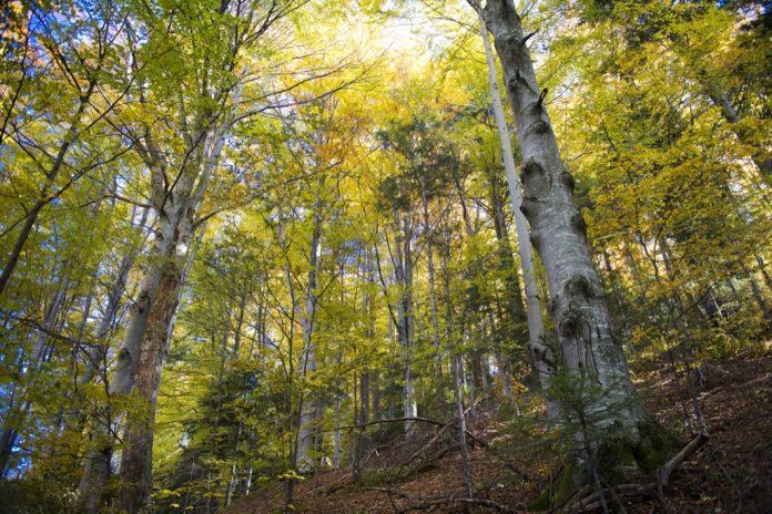 Animalele sălbatice din pădurea de lângă comuna gorjeană Ciuperceni au împrăștiat sute de kilograme de medicamente expirate (Foto: Ministerul Mediului / Mircea Verghelet)