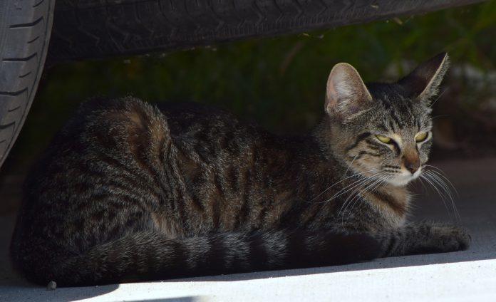 Pisica a ajuns din Olanda în Austria, după ce s-a ascuns într-o mașină (Foto: Tracie Hall / Flickr)