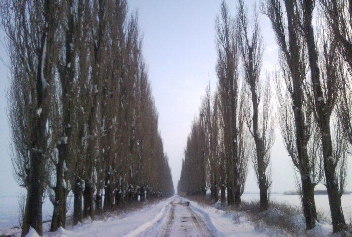 Un drum cu plopi a fost distrus pe bani publici în Iași (Foto: Mapio)