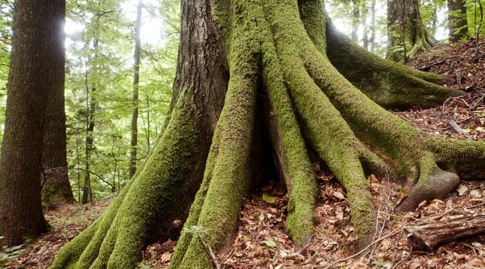 păduri virgine unesco