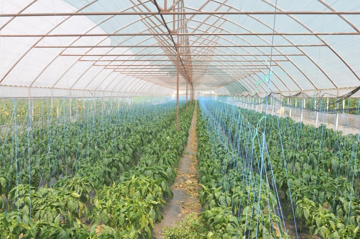 sere legume gradinari