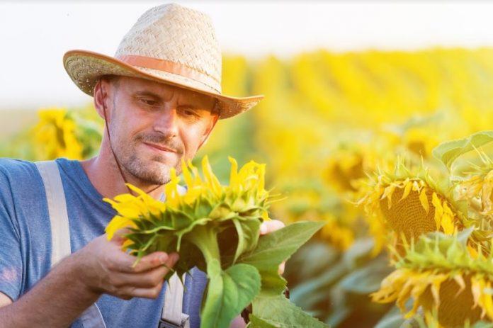 Sfaturi pentru fermieri aflați la început de drum. Foto: Shutterstock
