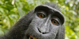 selfie macac