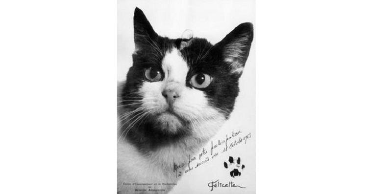 """""""Vă mulțumesc că ați participat la misiunea mea"""", este mesajul scris în această fotografie a singurei pisici care a ajuns în spațiu. Foto: CERMA, CNES"""