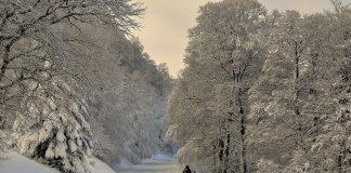 ninsoare zăpadă cod galben