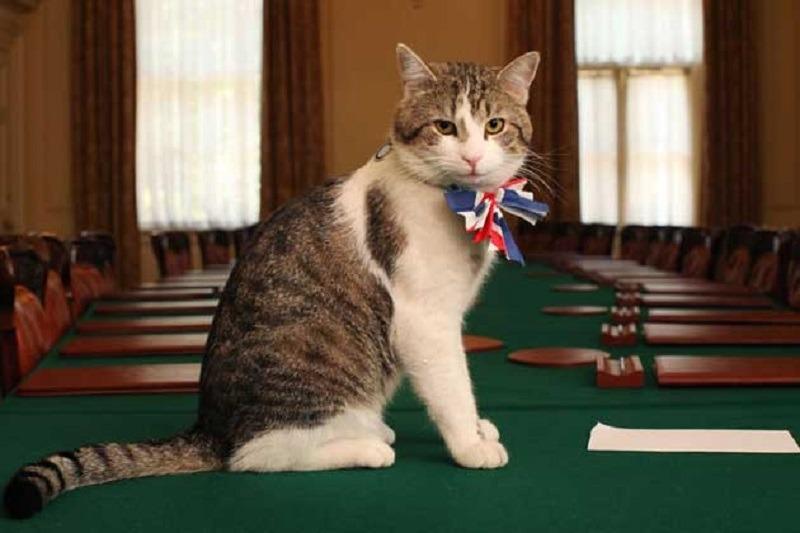 Englezii au și ei o pisică responsabilă cu prinderea șoarecilor în biroul prim-ministrului. Foto: Wikimedia Commons