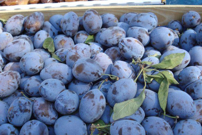 România, lider european la producția de prune. Foto: Julie Gibbons / Flickr