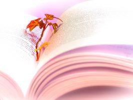 FOTO:Atlantios/Pixabay.com