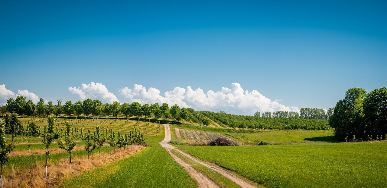 Fonduri europene în agricultură. Foto: Pixabay