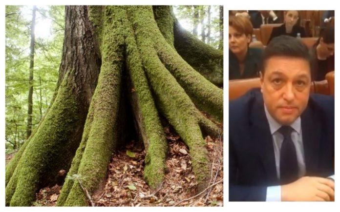 păduri virgine lucrări de utilitate publică