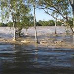 Dunărea a atins cote alarmante în ultimele zile. Foto: Pixabay