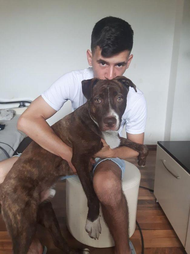 câine bloc timișoara