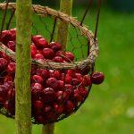 idei profitabile în agricultură romania