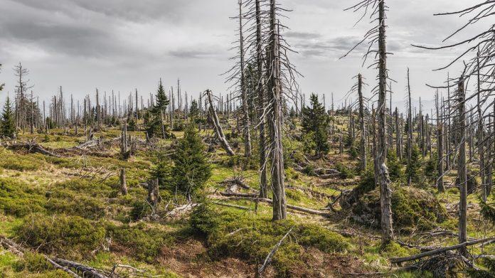 pădure copaci