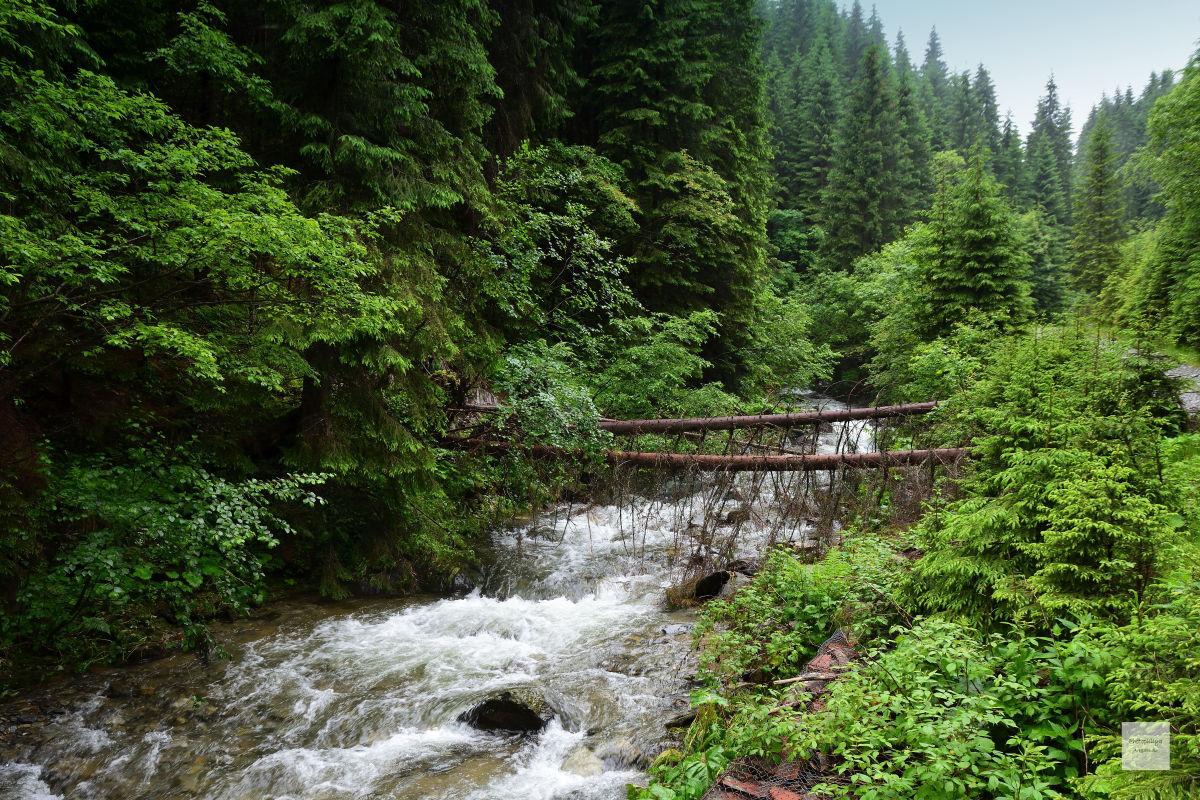 cascada raul Doamnei