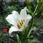 floare3