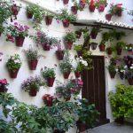 case-decorate-cu-plante-cataratoare-00