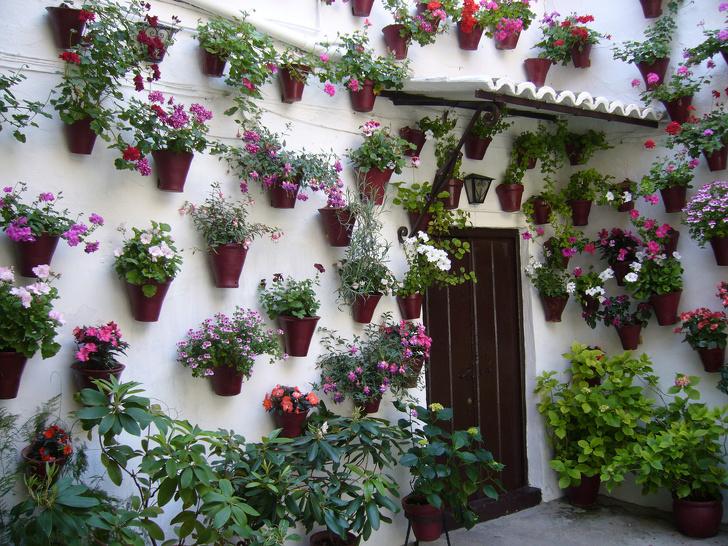 case decorate cu plante cățărătoare