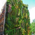case-decorate-cu-plante-cataratoare-01