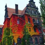 case-decorate-cu-plante-cataratoare-03