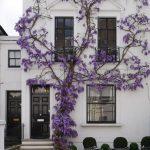 case-decorate-cu-plante-cataratoare-04