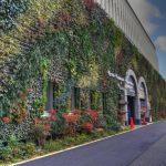 case-decorate-cu-plante-cataratoare-07