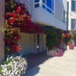 case-decorate-cu-plante-cataratoare-08