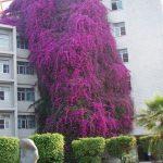 case-decorate-cu-plante-cataratoare-09