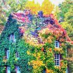 case-decorate-cu-plante-cataratoare