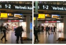 român arestat aeroport schiphol