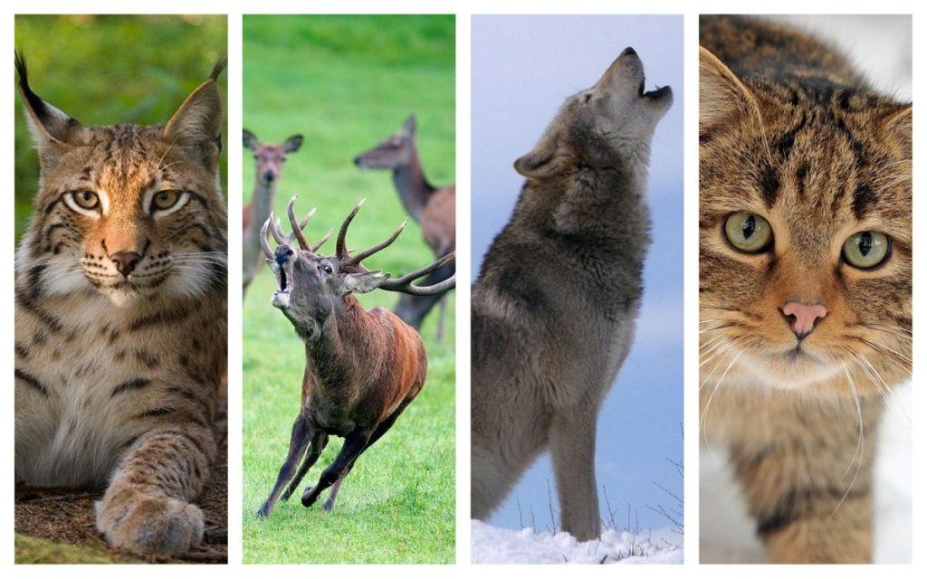 Expresii frumoase despre animale salbatice