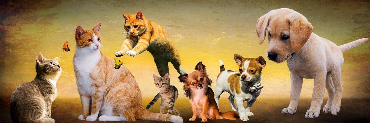 pisici câini Recensământul animalelor de companie în București