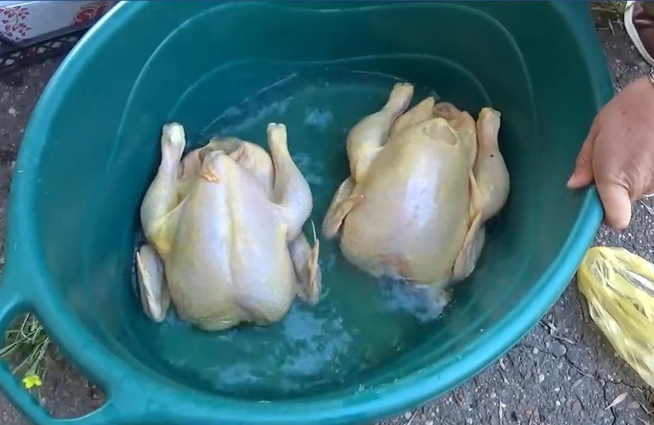 găini vopsite galben galați