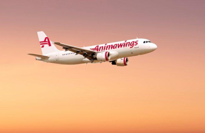 animawings nouă companie aeriană