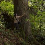 paznicul cibinului arborele european al anului 2020