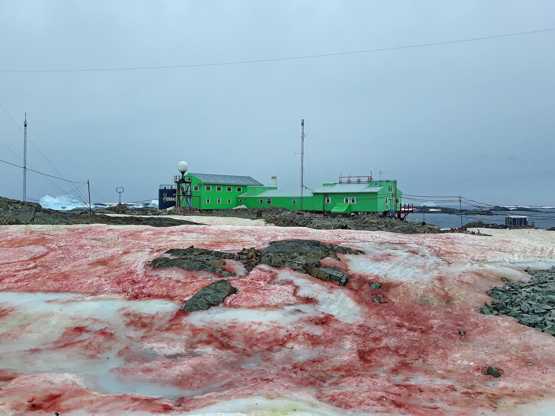 zăpadă din antarctica roșie