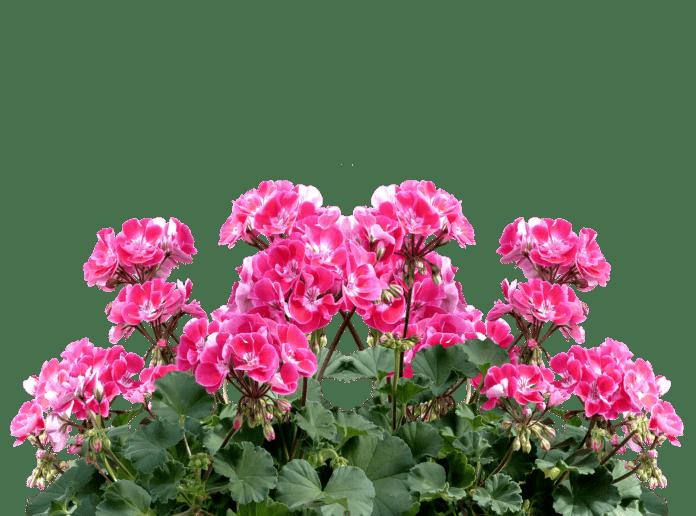 Foto: pixabay.com