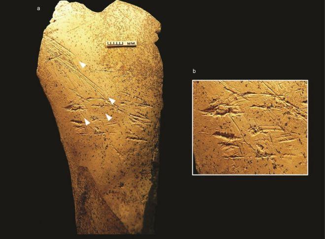 cele mai vechi unelte din os