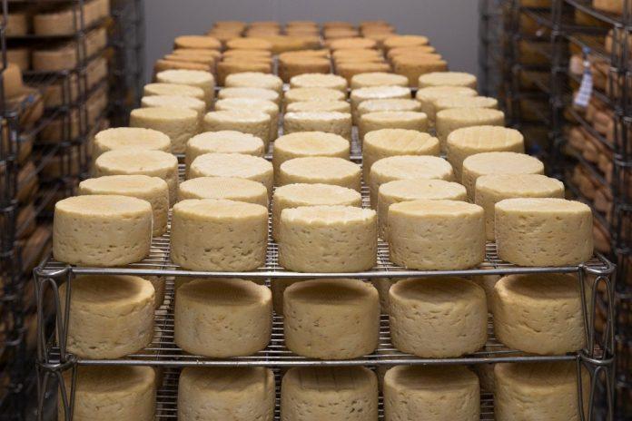 câte calorii are brânza de vacă