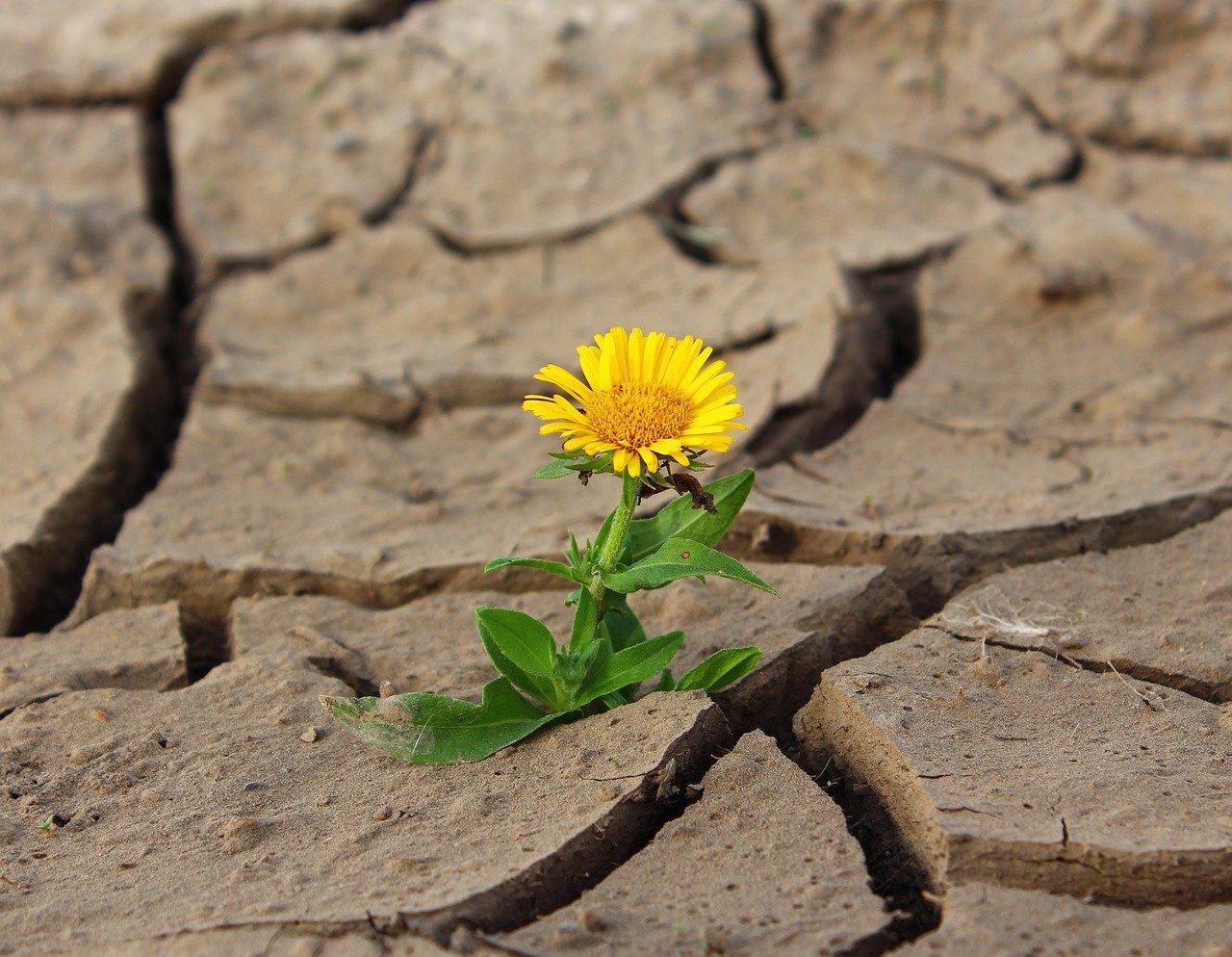 FOTO: klimkin/Pixabay.com