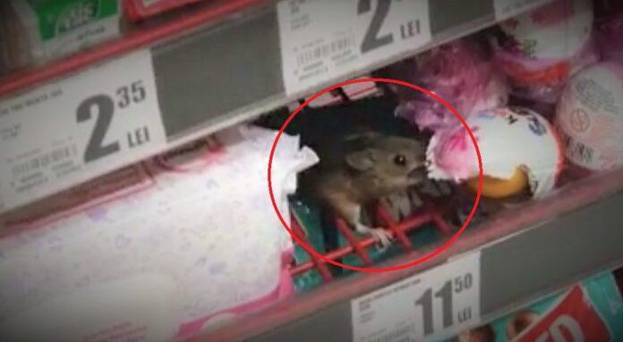 șoarece magazin auchan cluj