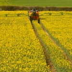 Farmer,Spraying,His,Rape,Seed,Crop,,Also,Known,As,Canola