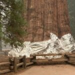 sequoia-generalul-sherman